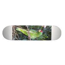 Wild Amazon Parrot Birds Animals Wildlife Skateboard