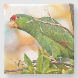 Wild Amazon Parrot Birds Animals Wildlife Stone Coaster