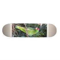 Wild Amazon Parrot Birds Wildlife Animals Skateboard