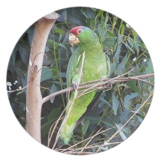 Wild Amazon Parrot Dinner Plate plate