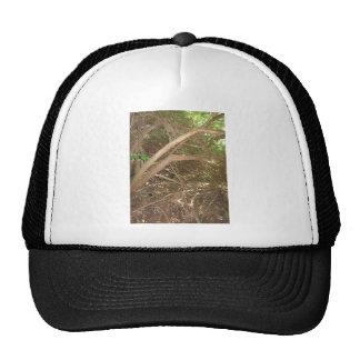 WILD America Cherry Hill New Jersey Photo NVN662 Trucker Hat