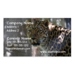 Wild Amur Leopard Business Cards