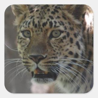 Wild Amur Leopard Stickers