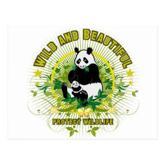 Wild and beautiful Panda Postcard