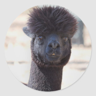 Wild and Crazy Alpaca Hair Style Classic Round Sticker