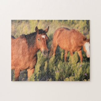 Wild and Free American Mustang Horse Puzzle