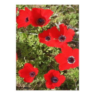 Wild Anemone Flowers In A Spring Field Card
