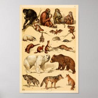 Wild Animal Collection Bear Wolf Monkeys Print