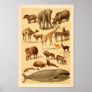 Wild Animal Collection Elephant Giraffe Art Print