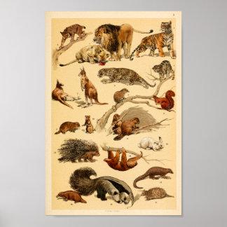 Wild Animal Collection Lion Tiger Rabbit Print