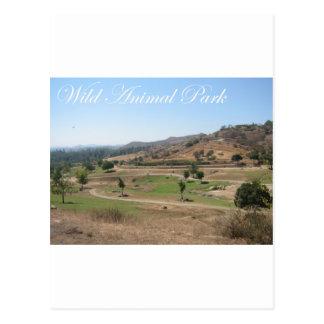 Wild Animal Park 2 Postcard