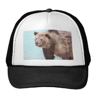 wild,animal,water,wildlife,bear,colorado hat