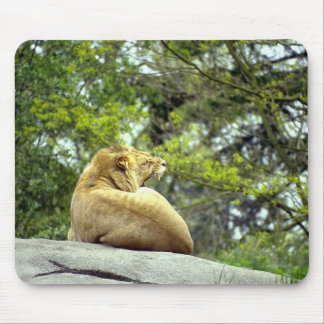 Wild Animals 14 Mouse Pads