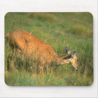 Wild Animals 23 Mouse Pads