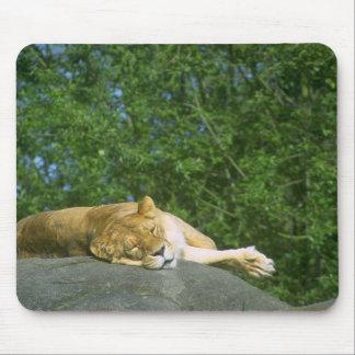 Wild Animals 27 Mouse Pad