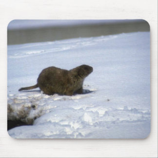 Wild Animals 33 Mouse Mats