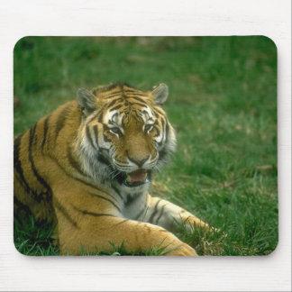 Wild Animals 37 Mouse Mat