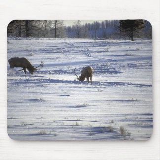Wild Animals 92 Mouse Pads