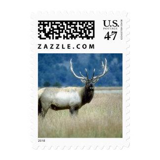 Wild Animals 93a Postage