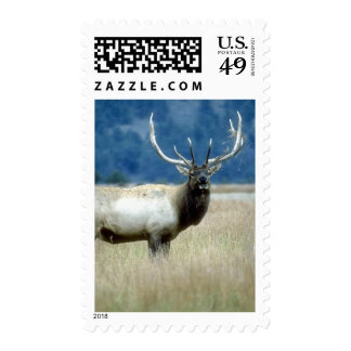 Wild Animals 93a Postage Stamps