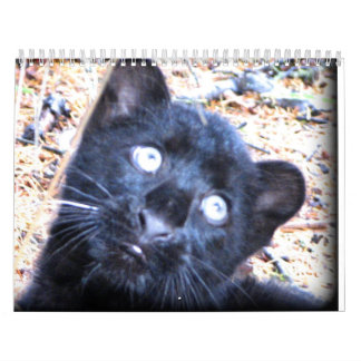 Wild Animals Calender 2012 Calendar