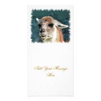 WILD ANIMALS - GUANACO CARD