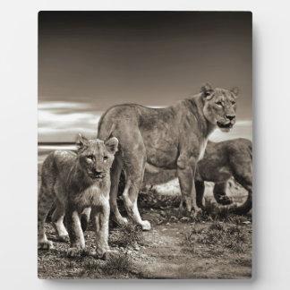 WILD ANIMALS LIONS CUBS LIONESS BEAUTY NATURE PHOT PLAQUE
