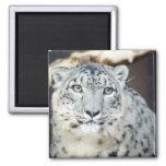 Wild Animals Refrigerator Magnet