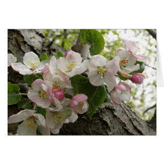 Wild Apple Blossoms - Greeting Card