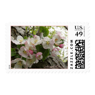 Wild Apple Blossoms - Pretty In Pink Stamp
