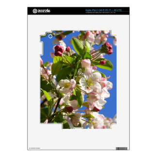 Wild Apple Tree blossoms iPad 3 Decal