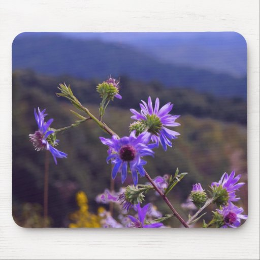 Wild Asters Mouse Pad