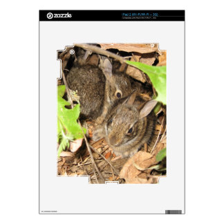 Wild Baby Bunnies Decals For iPad 2