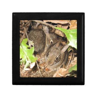 Wild Baby Bunnies Keepsake Box