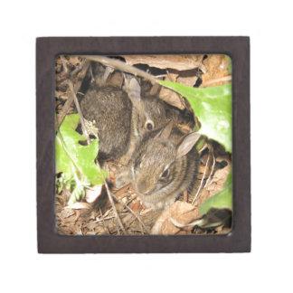 Wild Baby Bunnies Premium Keepsake Box