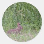 Wild Baby Bunny Rabbit Classic Round Sticker