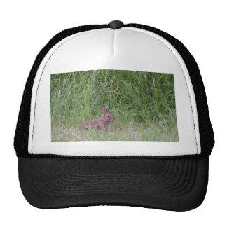 Wild Baby Bunny Rabbit Mesh Hat