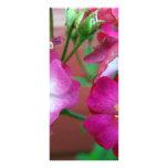 wild baby roses customized rack card