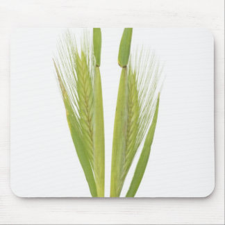 Wild barley (hordeum) mouse pad