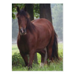 Wild Bay Horse Postcard