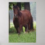 Wild Bay Horse Poster