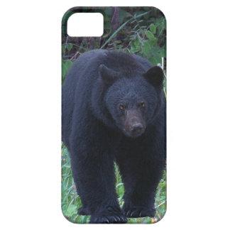Wild Bear Animal-lovers Wildlife Gift iPhone SE/5/5s Case
