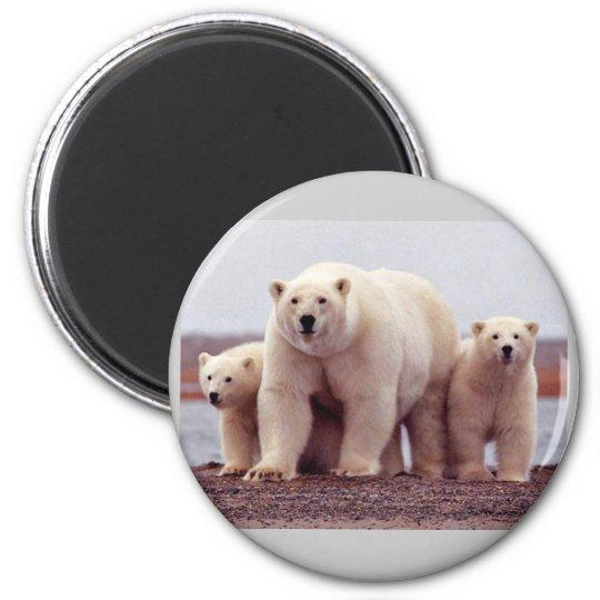 Wild Bears Magnet