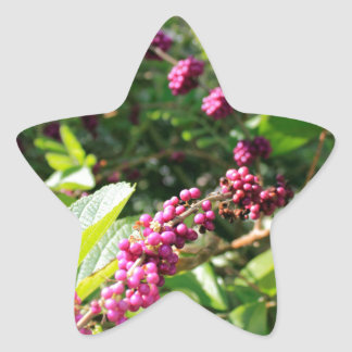 Wild Beautyberry Bush Outside in Sunny Florida Day Star Sticker
