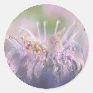 Wild bergamot beebalm flower classic round sticker