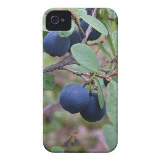 Wild Berries Blackberry Bold case