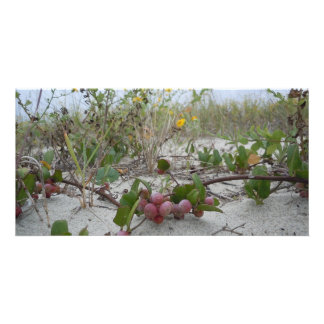 Wild Berries on the Beach Card