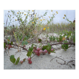 Wild Berries on the Beach Photo Art