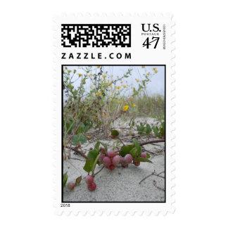 Wild Berries on the Beach Postage