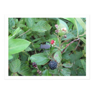Wild Berries Postcard